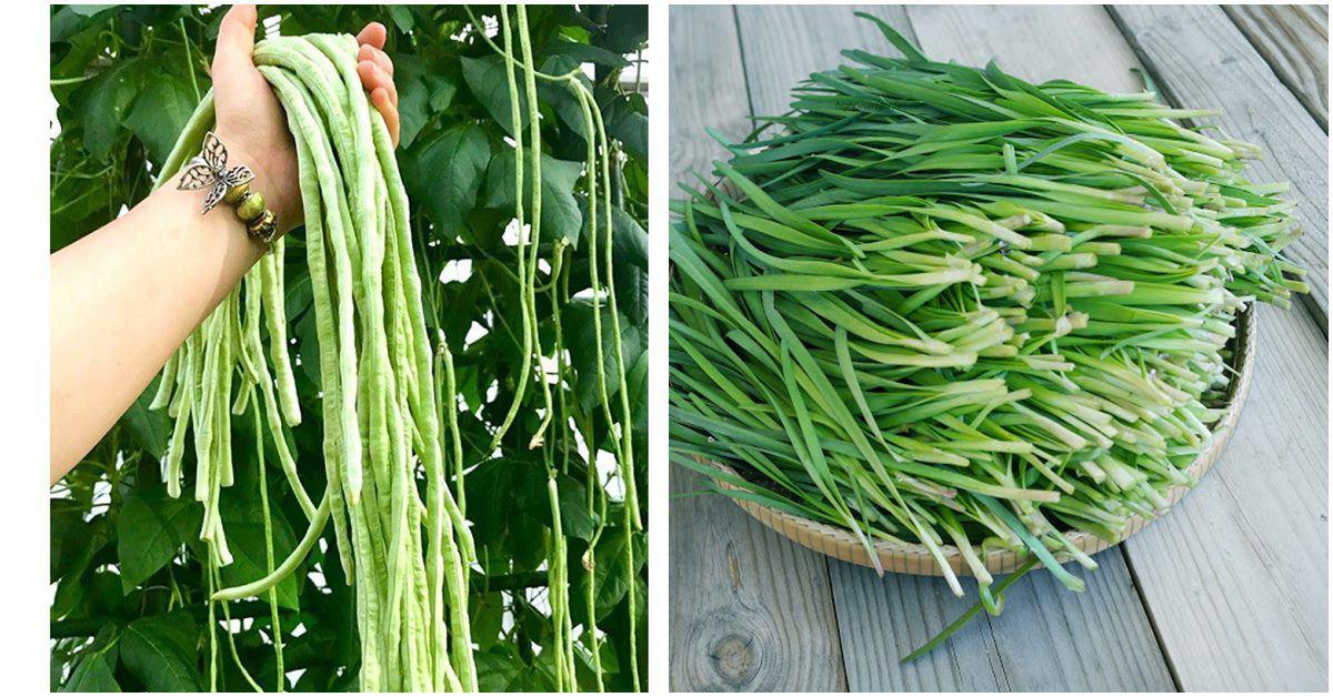 7 loại rau trồng không cần nắng, càng để râm càng bội thu cả rổ