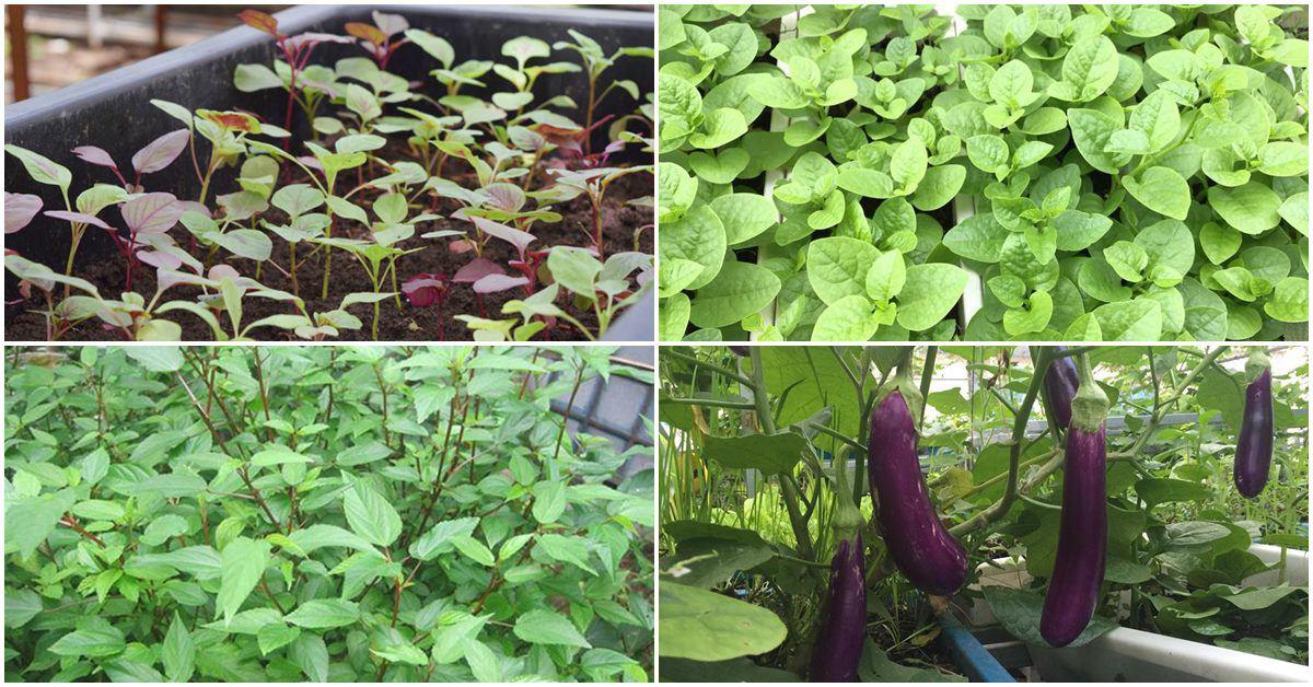 Các loại rau quả đón hè nên trồng trong tháng 4, trời vừa hửng nắng đã có rau ăn