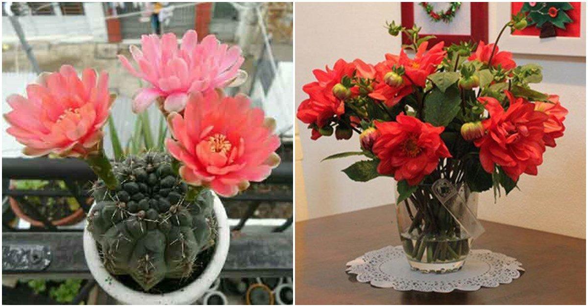 """5 loại cây, hoa """"phá tan"""" phong thủy, gia chủ chớ dại đặt trong nhà"""