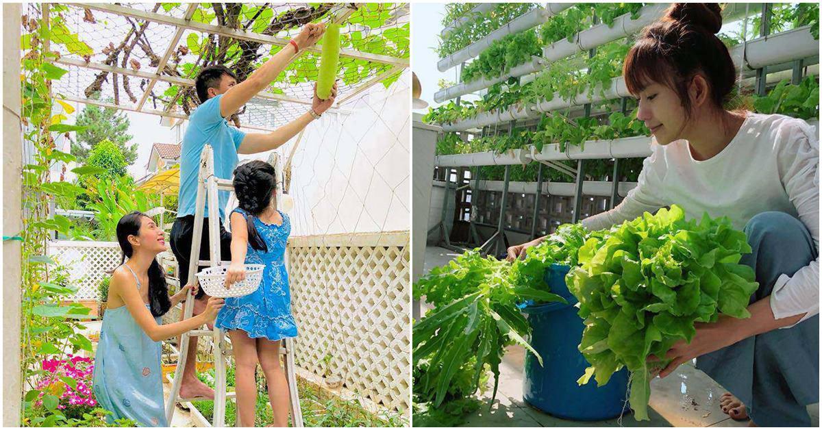 Sao Việt ở biệt thự chục tỷ vẫn tự trồng rau, thành quả thu về như nông trại