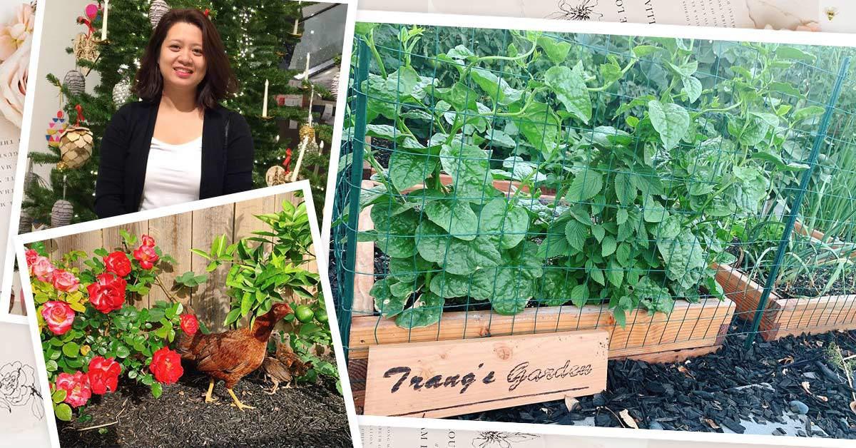Mẹ Việt sang Mỹ tự cuốc đất trồng cây, nuôi 36 con gà,... ăn không hết phải mang cho