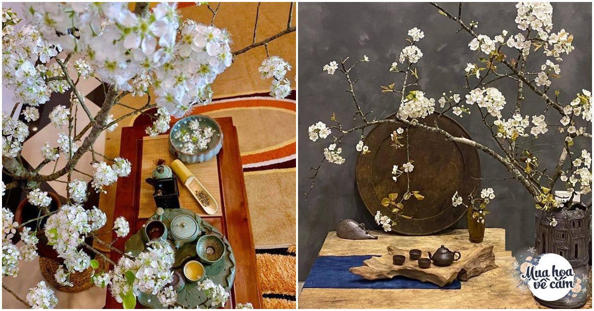 Muôn kiểu cắm hoa lê đẹp mê hồn của mẹ Việt, nhìn chỉ muốn rước về chưng ngay