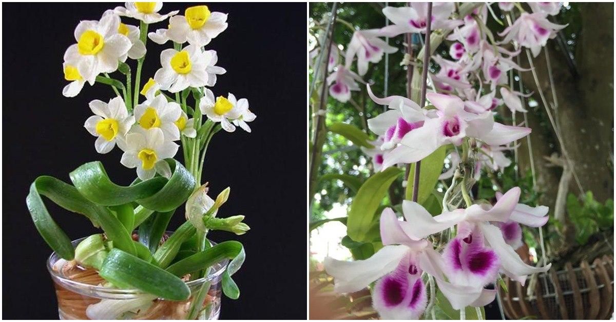 8 loại cây hoa nhà giàu hay chơi, đặt phòng khách cực hợp phong thủy