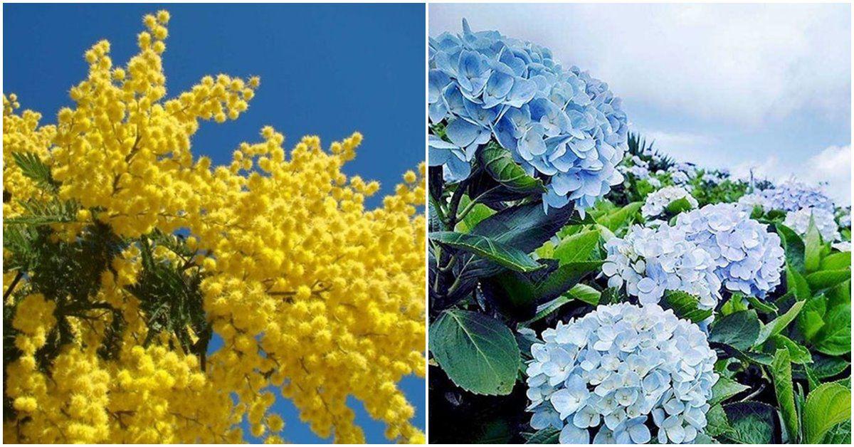 5 loài hoa bung sắc rực nhà, nhanh tay trồng kịp nở vào mùa đông