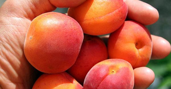 """5 loại quả được ví như """"thuốc làm trắng da"""" tự nhiên lại giúp loại bỏ dầu nhờn dư thừa, ở Việt Nam vừa có nhiều vừa rẻ"""